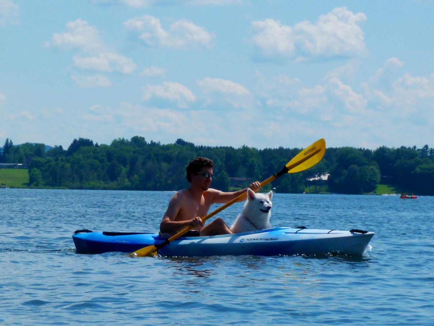 Dog PFD Guidelines: Keeping Your Dog Safe While Kayaking
